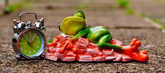 видеть во сне жабу лягушку сонник